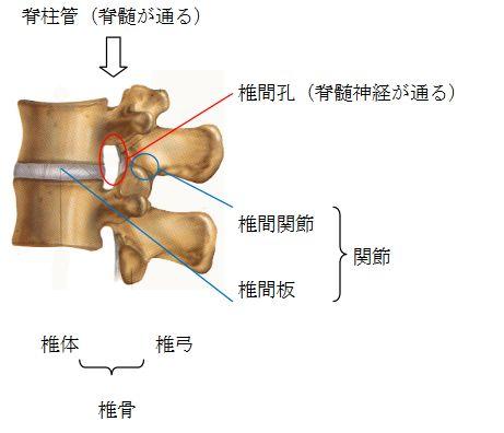 http://www.kameda.com/pr/spine/pdf/cafe1_3.pdf