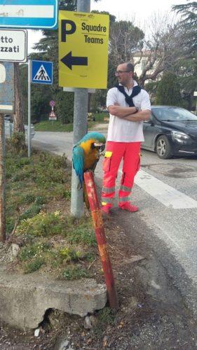 https://www.hln.be/sport/time-out/daar-is-franky-papegaai-groet-renners-tijdens-eerbetoon-aan-scarponi~ab176d67/