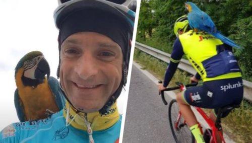 https://www.hln.be/sport/time-out/franky-de-trouwe-metgezel-van-de-betreurde-michele-scarponi-heeft-een-nieuw-maatje~ae2a4683/